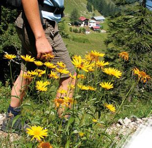 aktiv sein & schlemmen in Oberbayern und Tirol