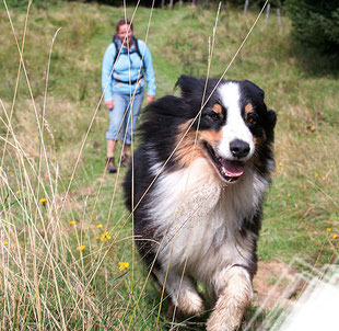 Die schönsten Wanderungen mit Hunden in Oberbayern und Franken