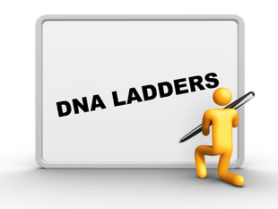 DNA Ladder and DNA Weight Marker 100 plus bp