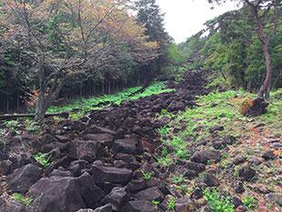 山添村鍋倉渓の湧き水