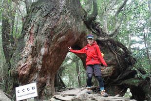くぐり杉をくぐってハイポーズ(白谷雲水峡ガイドツアー)