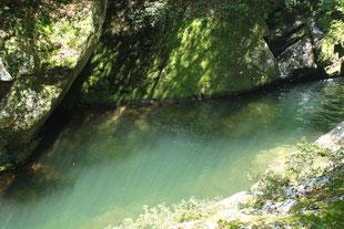 透き通るほど美しい、白谷川(白谷雲水峡ガイドツアー)