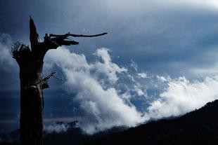 太鼓岩から湧き上がる雲を見つめる(白谷雲水峡ガイドツアー)