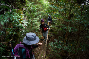木板の橋をゆっくり渡る,太忠岳,屋久島,ガイドツアーにて