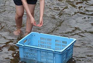白根魚苑ニジマスのつかみ取り体験