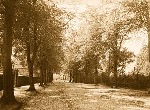 Lindenallee in der Dorfmitte (links bereits unsere Feldsteinmauer)