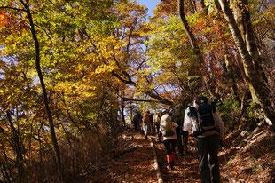 ブナ林の紅葉は圧巻 10月