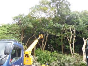 立木伐採状況