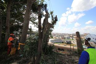 特殊伐採事例(JR武蔵野線|千葉県松戸市)ウッドタワー工法にて施工