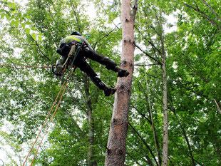 ウッドタワー工法は空中で隣の木に移動できます。