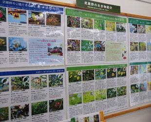 ●サービスセンターの中には、武蔵野の生物紹介のコーナーが。この時期に見られる草花がよくわかります