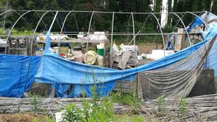 パイプハウスを解体、撤去、つくばみらい市の不用品回収業者