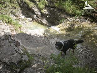 Wandern mit Hund; mein-wanderhund; Berchtesgaden; Schwarzachen; Bichleralm; Klausenrundweg
