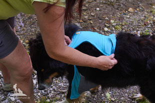 Wandern mit Hund, mein Wanderhund Ari, Andrea Obele, Kühlweste für Hunde