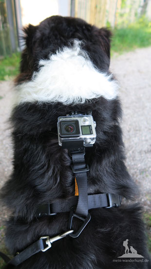 Kurgo Camera Mount Dog Harness Hund Video GoPro