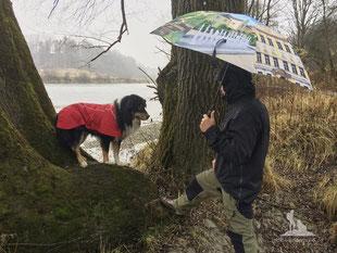 Wandern mit Hund, mein Wanderhund Ari, Andrea Obele, Ruffwear Aira Regenjacke; Test