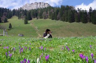 Wandern mit Hund Frühjahr Chiemgau Heuberg