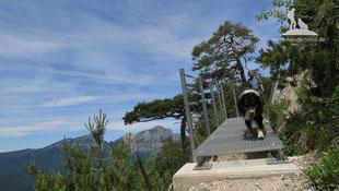 Wandern mit Hund Frühjahr Berchtesgadener Land Dötzenkopf