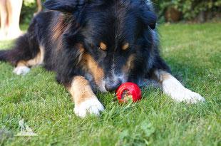 Wandern mit Hund, mein Wanderhund Ari, Andrea Obele; Hundeeis; Eis für Hunde