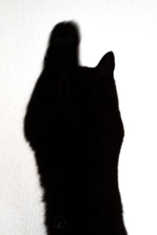 Katze im Licht