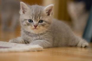 August 12, BKH-Kitten
