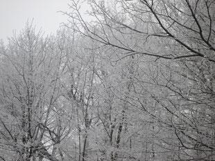 カメラで撮った写真をPCに取り込めなくなってしまい、ブログもご無沙汰してしまいました。こちらの写真は昔撮った真冬のウィーンの森です。今日の北九州はウィーンの冬を思い出させる、きりっと冷え引き締まるような空気。雪の中、さっくっさっくと鳴る足音も懐かしい。車の通りも少なく、静かな日曜日です。