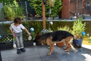 Ben spielt mit Aska