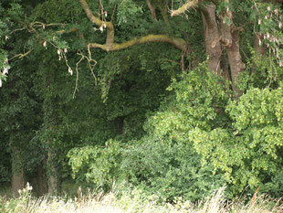 Ein Wald lockt den Entdecker in uns.