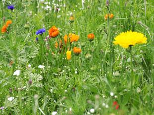 Frische Blumen für die leckere Blütenküche.
