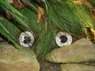 Aus sogenannten Kräuterköpfen kann bald frisches Grün wachsen.