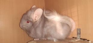 Blond RPAträger