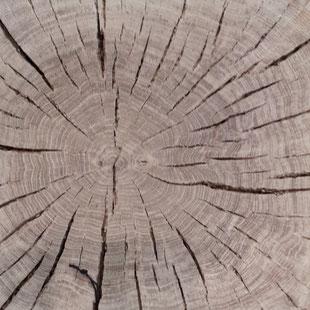 Timber Cross Section Photo by Heidi Mergl Architect