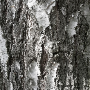 Natural Bark Texture Photo by Heidi Mergl Architect