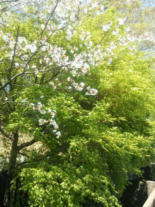 春と初夏がまじりあっています!!