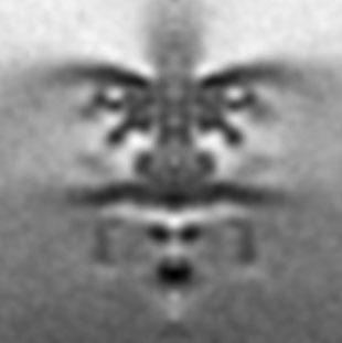 Flagellar motor of Shewanella putrefaciens