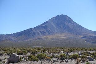 Paysage altiplano lama