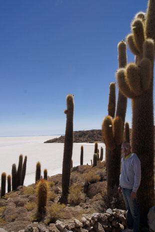 BOLIVIENline, reisen zur Salzwüste Uyuni