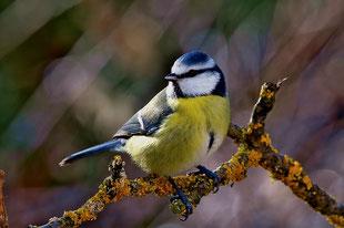 Groupe à la découverte des oiseaux forestiers