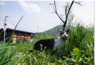 農園のねこ私の宝物さ!大事な猫画像