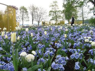 Blumenwiese auf der Bundesgartenschau 2009
