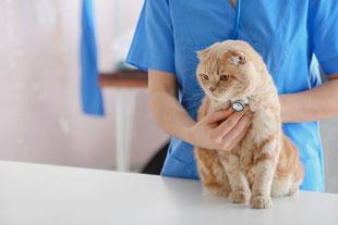 Bilan annuel de santé d'un chat