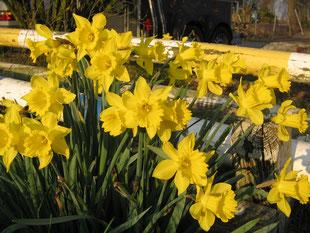 Frühling !!!!!