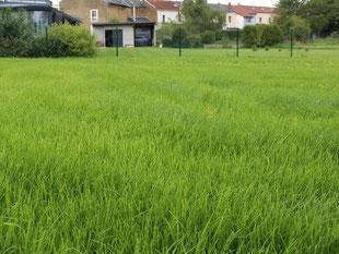 Création de pelouses - Entreprise de parcs et jardins Laurent Toussaint - Virton - Saint-Mard