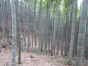 整備後の竹林