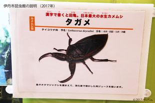 伊丹市昆虫館の説明