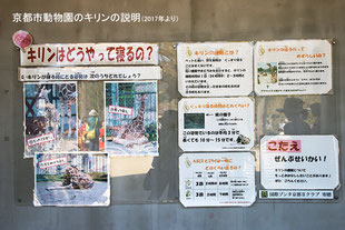 「きりんはどうやって寝るの?」京都市動物園の説明