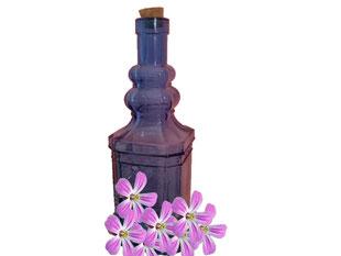 Storchschnabel Wein für die Fruchtbarkeit