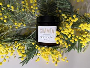 Le mimosa parfume votre maison.