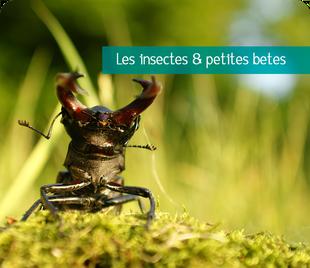 Galerie de photos d'insectes et petites bêtes de Sologne et d'ailleurs - Alexandre Roubalay photo nature - www.acadiaudimages.fr