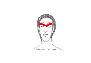 目と脳の間にある蝶形骨